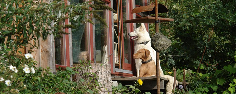 Hundehotel Hund & Hotel Lauterbach